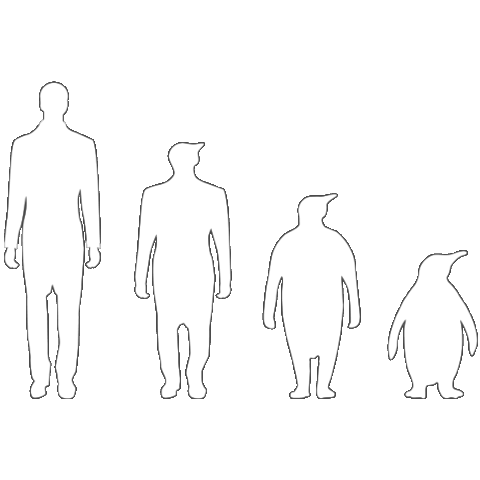 Evolution Pinguin auf dein T-Shirt